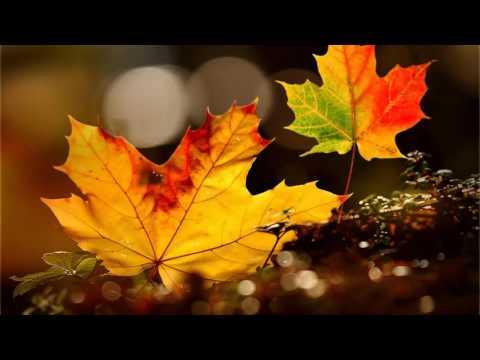 Осенний лист футаж