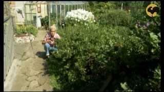 Садик мхов. САД день за днем №15.(Как сделать садик мхов? Какие опоры лучше всего использовать для растений?, 2013-01-24T13:01:46.000Z)