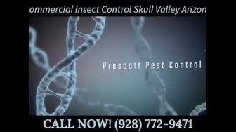 Commercial Insect Control Skull Valley AZ