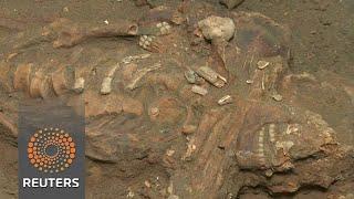 African skeleton reveals grim history of Brazil