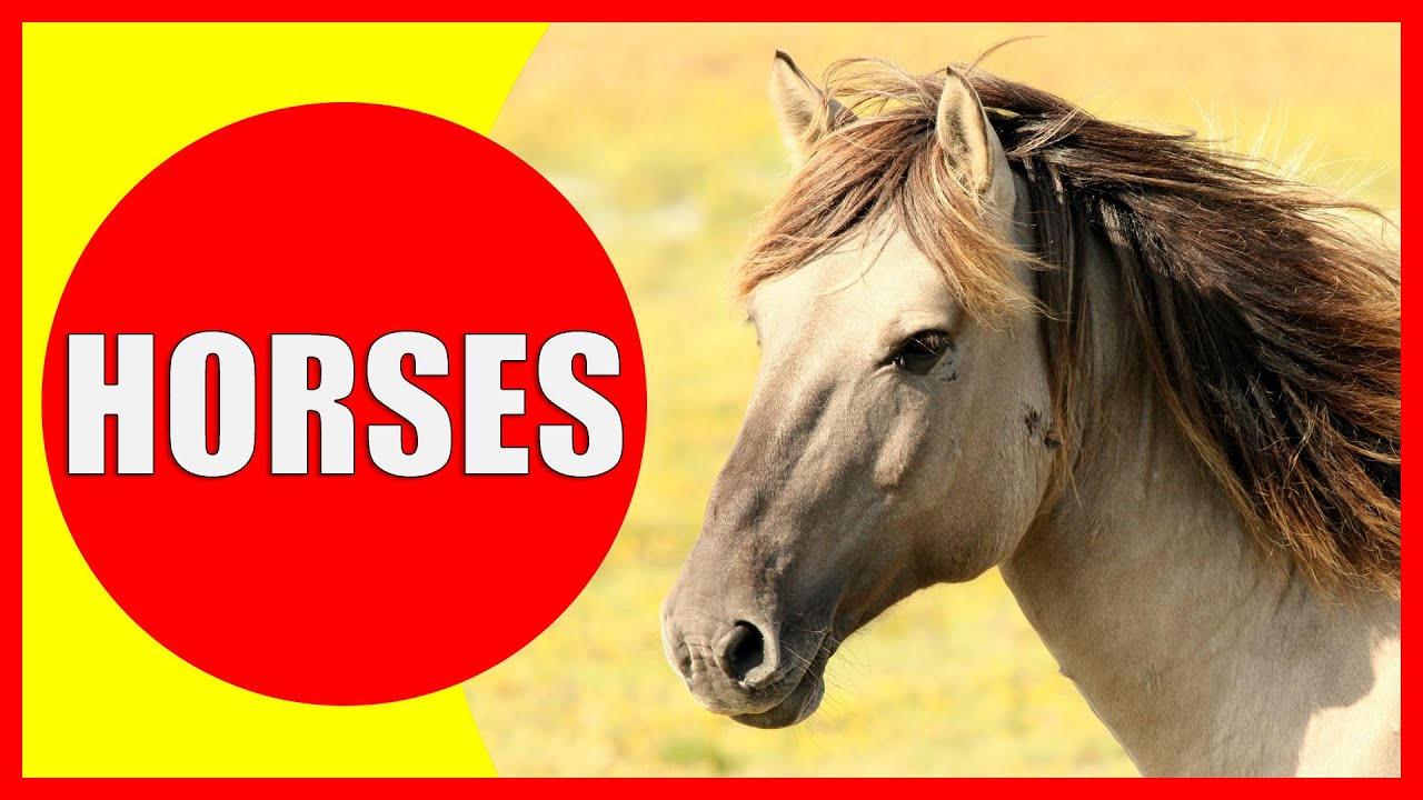 Horse Facts For Kids Learn About Horses For Children Horse