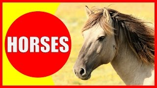 Horse Facts For Kids - Learn About Horses For Children & Horse Information   Kiddopedia