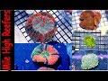 My 5 Favorite Corals at Aqua Medic Live (Scott's Picks)
