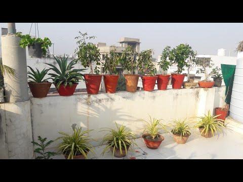 Rooftop Garden Overview || Fun Gardening || 4th JAN ,2018