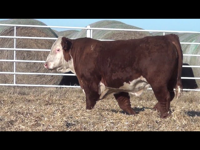 Express Ranches Lot 236
