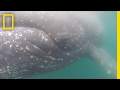 POV: See Antarctica From the Back of a Whale | National Geographic