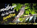 Masteran Burung Siri Siri Kecil Suara Jernih Tembakan Tajam Jeda  Menit  Mp3 - Mp4 Download