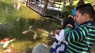 Japanese Garden with Family. Lush. Green. Zen. Skies. Kois. Pond. Bridge. Picturesque. May 2018