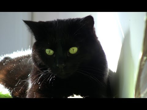 Lucky Black Cats - Black Cat Appreciation