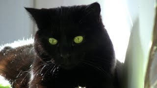 Lucky Black Cats - Black Cat Appreciation