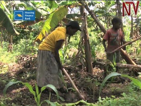 Gender gap in agricultural productivity costing Uganda Shs210 billion, says UN report