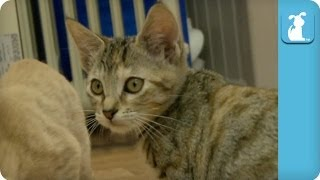 Kittens Floss After Brushing, You Should Too - Kitten Love