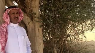 مظلة الصحراء شجرة السرح عبيد العوني وخالد المبدل