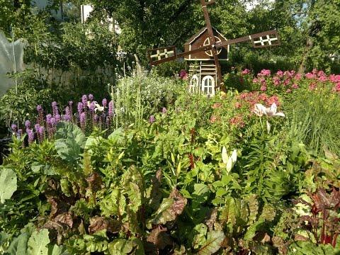 видео: Огород  смешанные посадки.Советы огородникам.