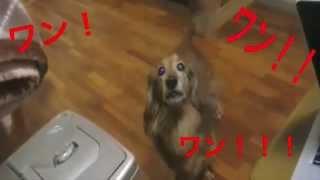 うちの犬は、いつも決まった時間にこうなります。 地元である浜松市天竜...