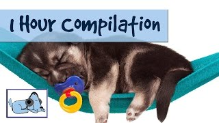 1 Hour Compilation! Music For Dogs  개를위한 음악 Música Para Perros - Improve Separation Anxiety