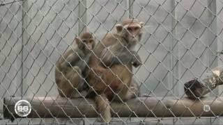 L'expérimentation animale : un mal nécessaire ? / Reportage de 66 minutes