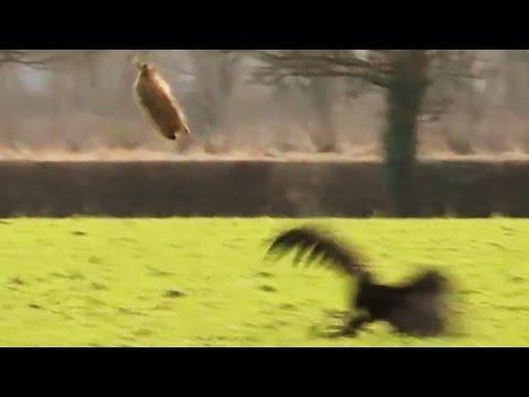 Fantastic Falconry