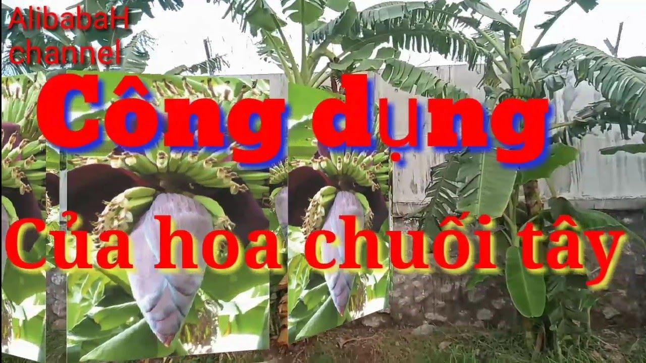 Công dụng của HOA CHUỐI, đối với sức khỏe con người, Hoa Chuối với vô vàn tác dụng bảo vệ sức khỏe