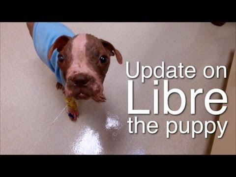 Update on Libre, a puppy found near-death in July