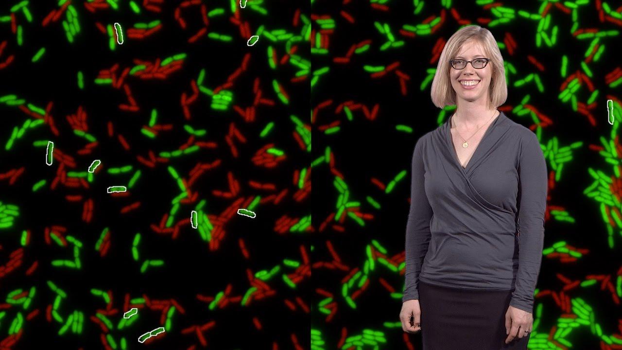 Pseudomonas aeruginosa Survives with a Gut Reaction