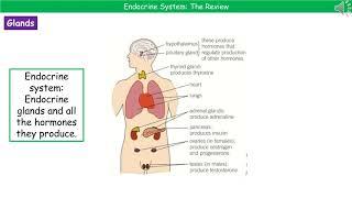 B3.2.1 - Hormones Summary