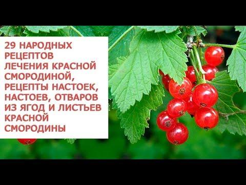 Целебные свойства красной смородины 29 народных рецептов лечения красной смородиной, рецепты настое