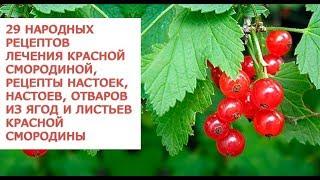 видео Красная смородина полезные свойства и противопоказания