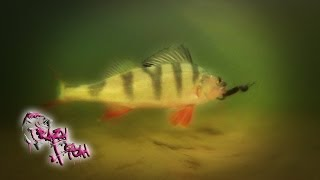 Про Рыбалку. Ловля Окуня на Микроджиг. VIBRO WORM. Crazy Fish.