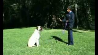 Hanrob Dog Training Sydney - Pet Dog Obedience Training For Sit And Stay Commands.