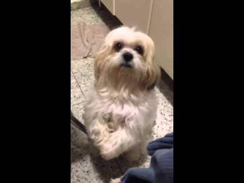 Dog Begging For Food Youtube