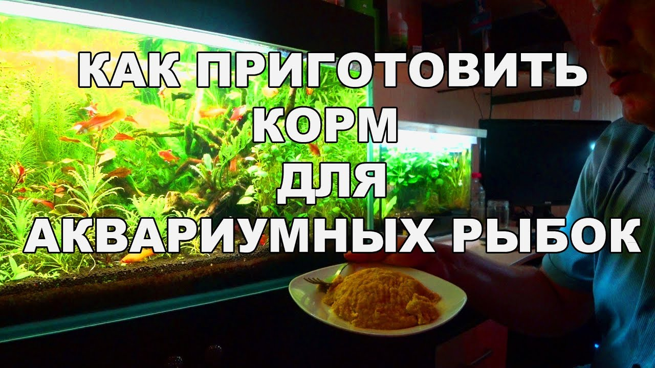 Аквариум корм своими руками фото 541