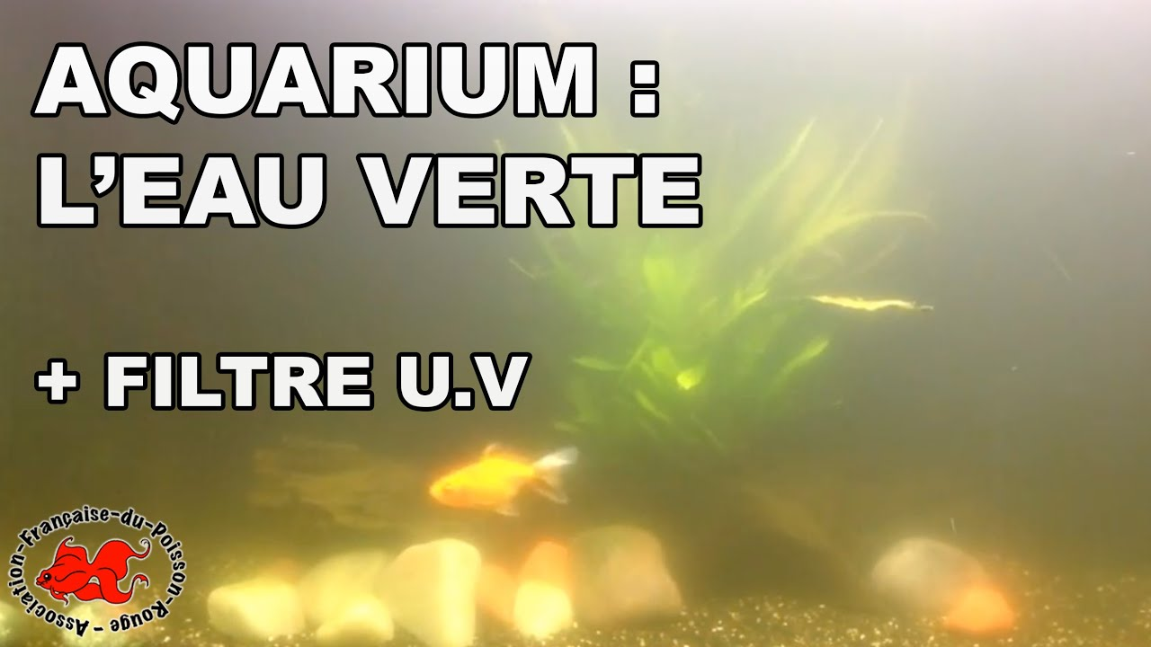 aquarium eau verte et filtre uv youtube. Black Bedroom Furniture Sets. Home Design Ideas
