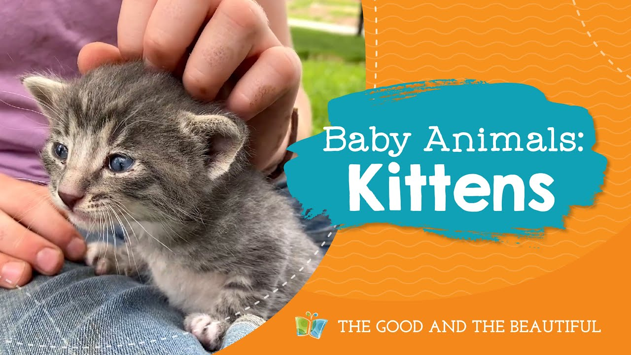 Baby Kittens | Baby Animals | The Good and the Beautiful