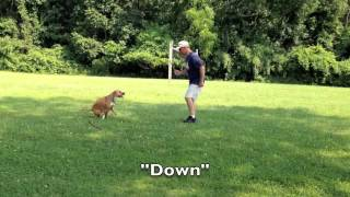 Dog Training Teaches Leash Manners To Excitable Dog