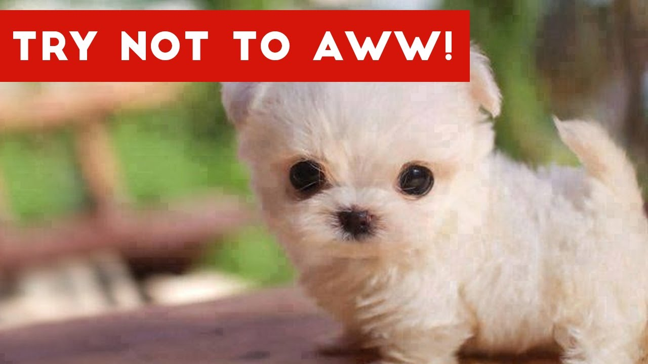 things that will make a girl say aww