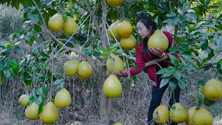 Chinese rural girl, Chinese food made with grapefruit | 野小妹wild girl