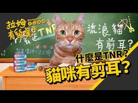 ►拉姆有幾噗◄ 為什麼貓咪要剪耳? TNR 是什麼?┃About TNR ♤