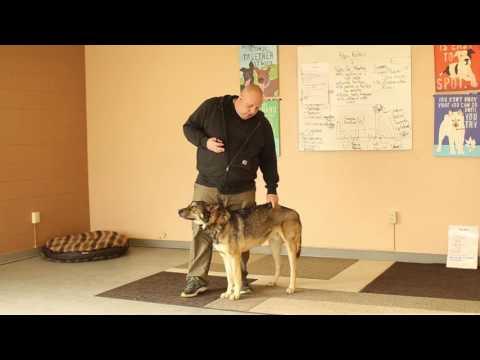 TYD60 Moment- Troubleshooting Dog Training- Ty the Dog Guy