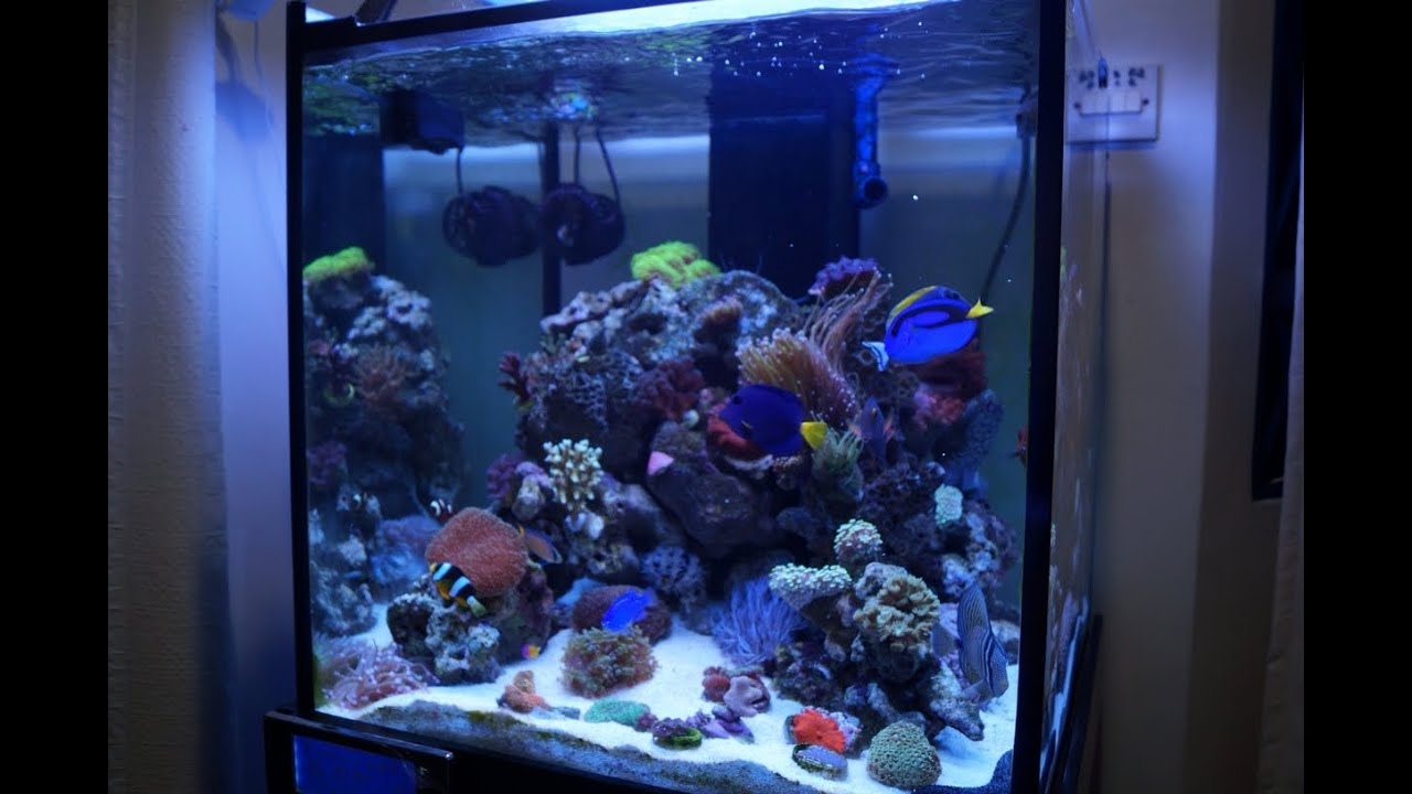 60cm cube reef tank 3 months update youtube for Cube saltwater fish tank