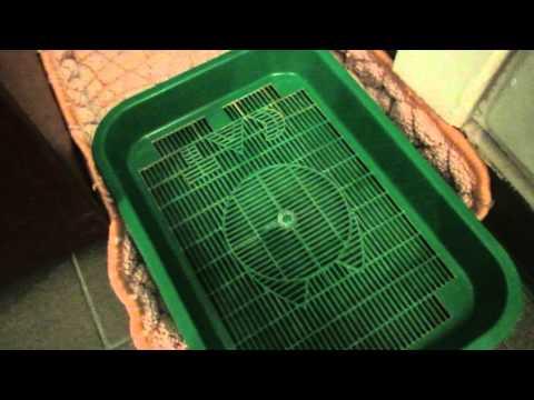 Как отучить кошку от наполнителя в лотке