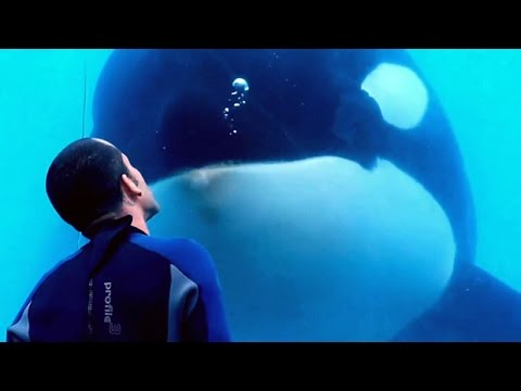 Blackfish Doc Writer On SeaWorld's Orca-breeding Program