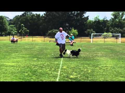 HOPE QUALIFIES FOR SKYHOUNDZ/HYPERFLITE DISC/Frisbee DOG WORLD CHAMPIONSHIPS