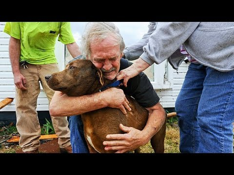 Dogs Meets Owner After Long Time | Faithful Dogs Who Never Forget You