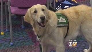 Therapy Dogs Lead To Justice, Healing For Child Abuse Survivors