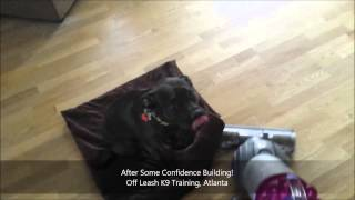 Confidence Building In Fearful Pups | 3 Year Old Pit Bill | Atlanta Dog Trainers