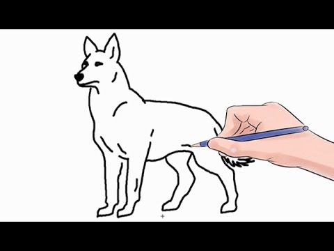 How To Draw A Wolf Easy Step By Step Youtube