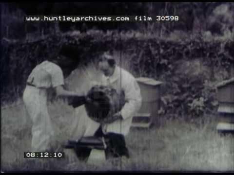 Bee Keeping In France, 1940s - Film 30598
