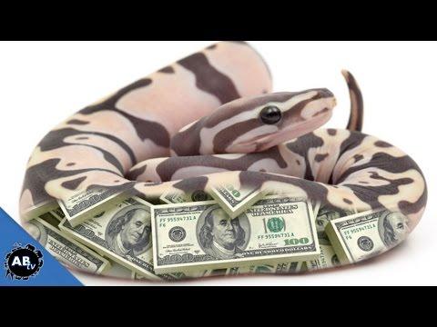 $150,000 SNAKE!!! SnakeBytesTV