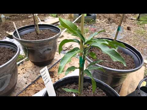 8 new tropical fruit trees